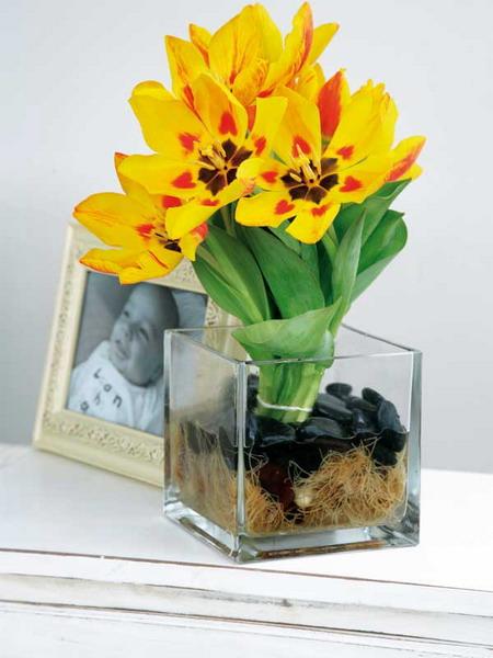 феерия цветок фото