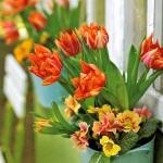spring-flowers-new-ideas-tulip3-7.jpg