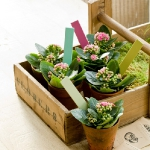 storage-labels-ideas-for-plants1.jpg