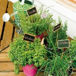 storage-labels-ideas-for-plants2.jpg
