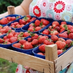 strawberry-season-dessert15.jpg