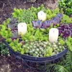 succulent-garden-in-home-and-outdoor1-1.jpg