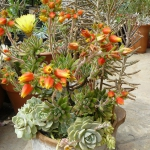 succulent-garden-in-home-and-outdoor1-10.jpg