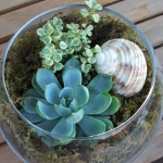 succulent-garden-in-home-and-outdoor1-3.jpg