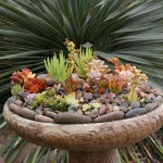 succulent-garden-in-home-and-outdoor1-4.jpg