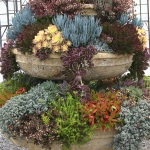 succulent-garden-in-home-and-outdoor1-5.jpg