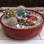 succulent-garden-in-home-and-outdoor1-6.jpg