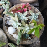 succulent-garden-in-home-and-outdoor1-9.jpg
