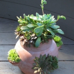 succulent-garden-in-home-and-outdoor2-1.jpg
