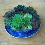 succulent-garden-in-home-and-outdoor2-10.jpg