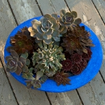 succulent-garden-in-home-and-outdoor2-12.jpg