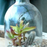succulent-garden-in-home-and-outdoor2-13.jpg