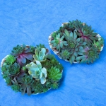 succulent-garden-in-home-and-outdoor2-14.jpg