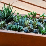 succulent-garden-in-home-and-outdoor2-15.jpg