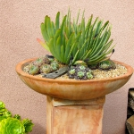 succulent-garden-in-home-and-outdoor2-2.jpg