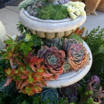 succulent-garden-in-home-and-outdoor2-3.jpg