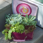 succulent-garden-in-home-and-outdoor2-8.jpg