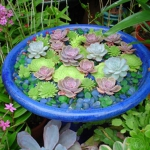succulent-garden-in-home-and-outdoor3-3.jpg