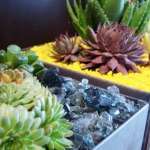 succulent-garden-in-home-and-outdoor3-5.jpg