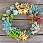 succulent-garden-in-home-and-outdoor4-2.jpg