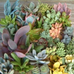 succulent-garden-in-home-and-outdoor4-4.jpg