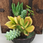 succulent-garden-in-home-and-outdoor4-5.jpg