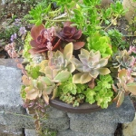 succulent-garden-in-home-and-outdoor4-6.jpg