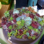 succulent-garden-in-home-and-outdoor4-8.jpg
