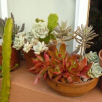 succulent-garden-in-home-and-outdoor4-9.jpg