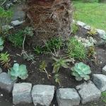 succulent-garden-in-home-and-outdoor5-11.jpg