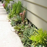 succulent-garden-in-home-and-outdoor5-3.jpg