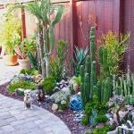 succulent-garden-tour1.jpg