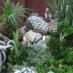 succulent-garden-tour4.jpg