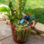 succulent-garden-tour5.jpg