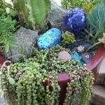 succulent-garden-tour6.jpg