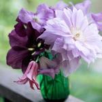 summer-flowers-classic2.jpg
