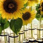 sunflowers-centerpiece-decorating-ideas1-3