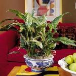tea-cup-as-floral-vases21.jpg