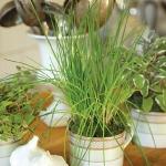 tea-cup-as-floral-vases23.jpg