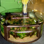 unusual-fish-tanks-ideas1-1.jpg