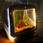 unusual-fish-tanks-ideas7-2.jpg
