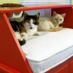 upgrade-furniture-for-pets1-3.jpg