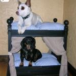 upgrade-furniture-for-pets2-2.jpg