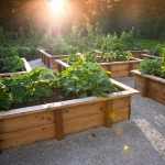 vegetable-garden-ideas1-1.jpg