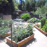 vegetable-garden-ideas1-4.jpg