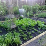 vegetable-garden-ideas2-3.jpg