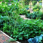 vegetable-garden-ideas7-2.jpg