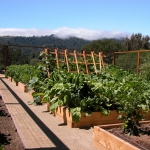vegetable-garden-paths-ideas10.jpg