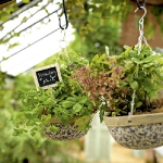 vintage-garden-pots4-1.jpg