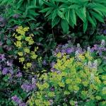 wild-garden-inspiration-flowers11.jpg